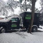 Tree Branch Removal Colorado Springs